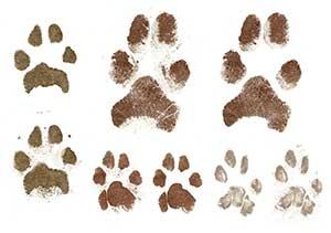 paper-paw-prints